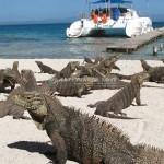 Cayo Iguana Island Day Trip