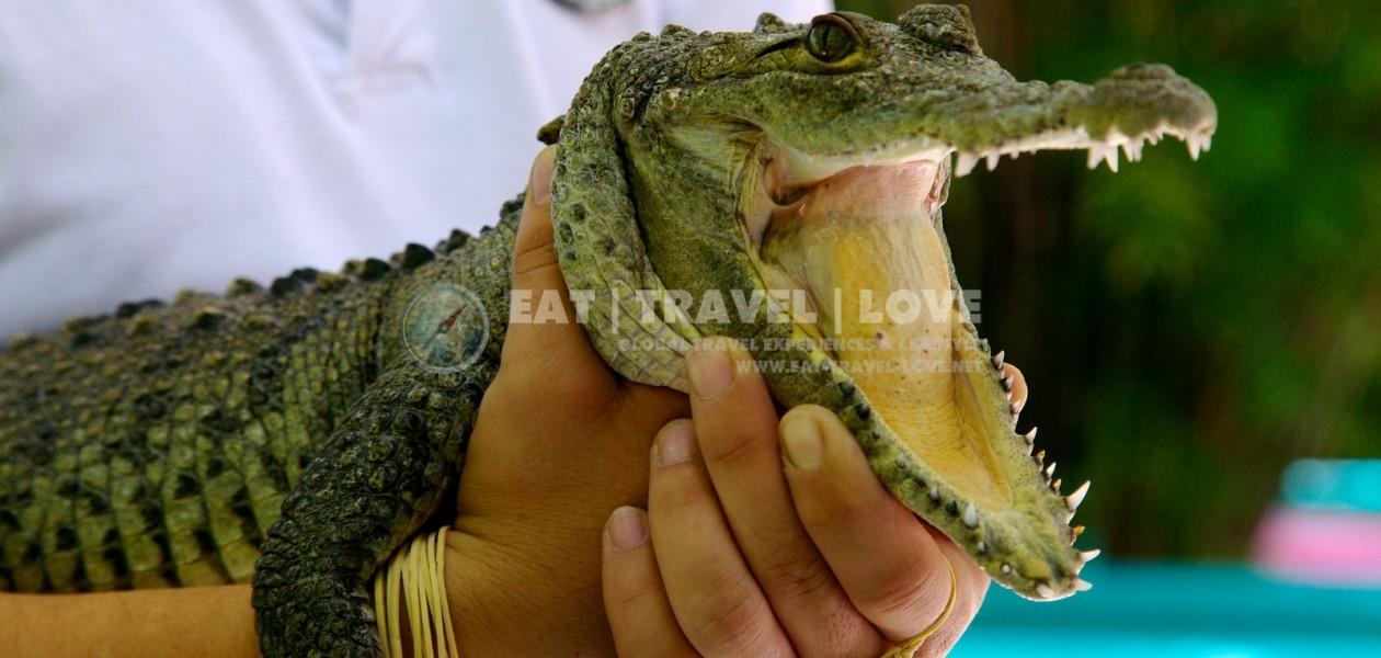 Crococun-Zoo-Cancun_Riviera_Maya