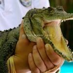 Crococun Zoo – Cancun/Riviera Maya